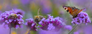 How you can help nature thrive
